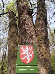 pamatne stromy