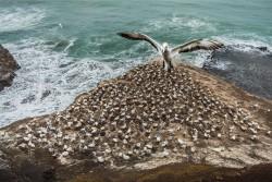 Ptáci volně žijící -Lukáš Martínek - Ochránce