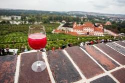 Vinobraní sv. Kláry v Botanické zahradě